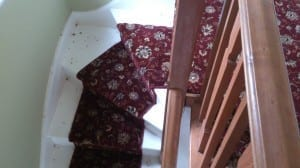 carpet types, wliton and axminster carpet